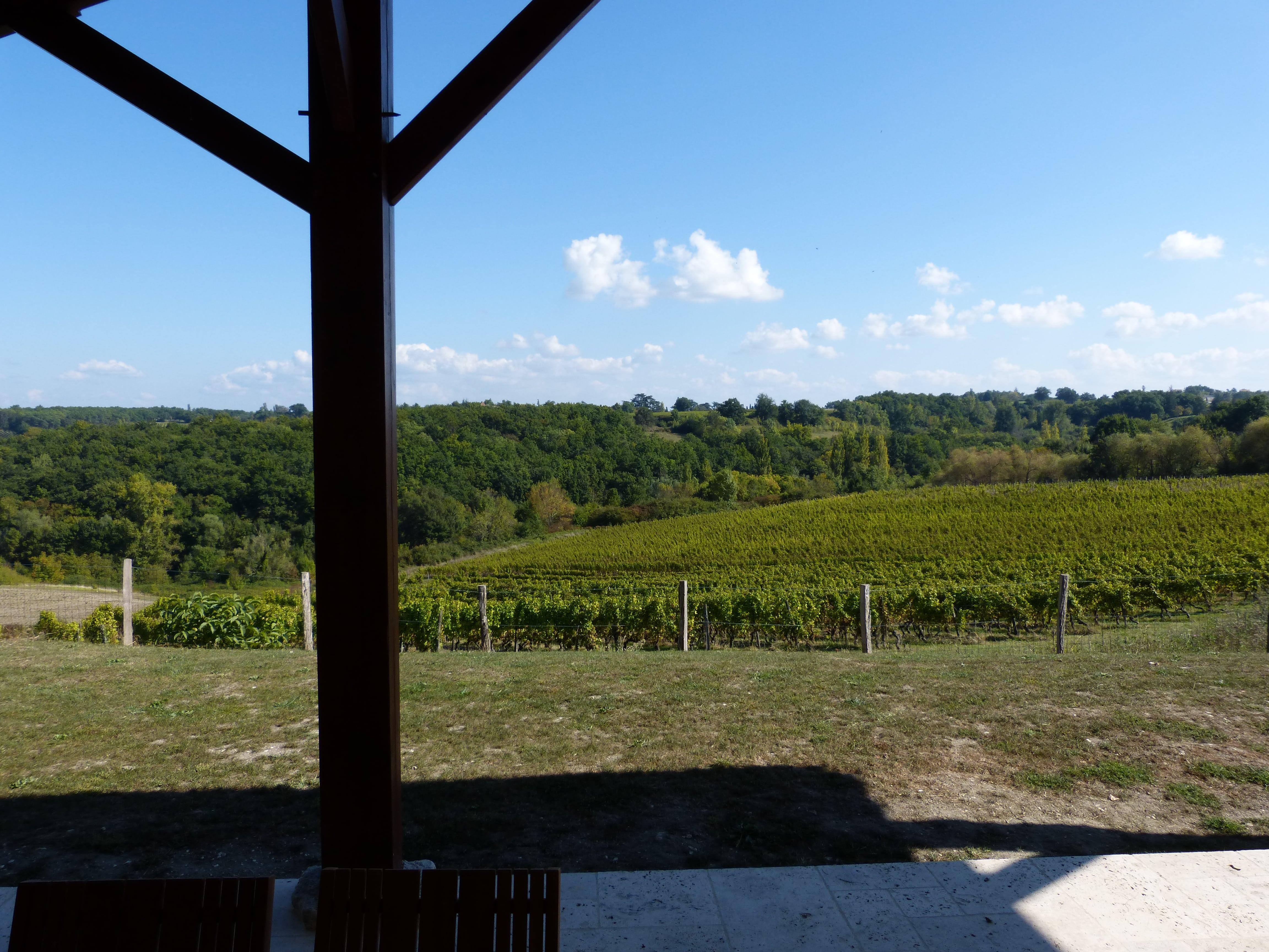 vue sur vignobles depuis terrasse
