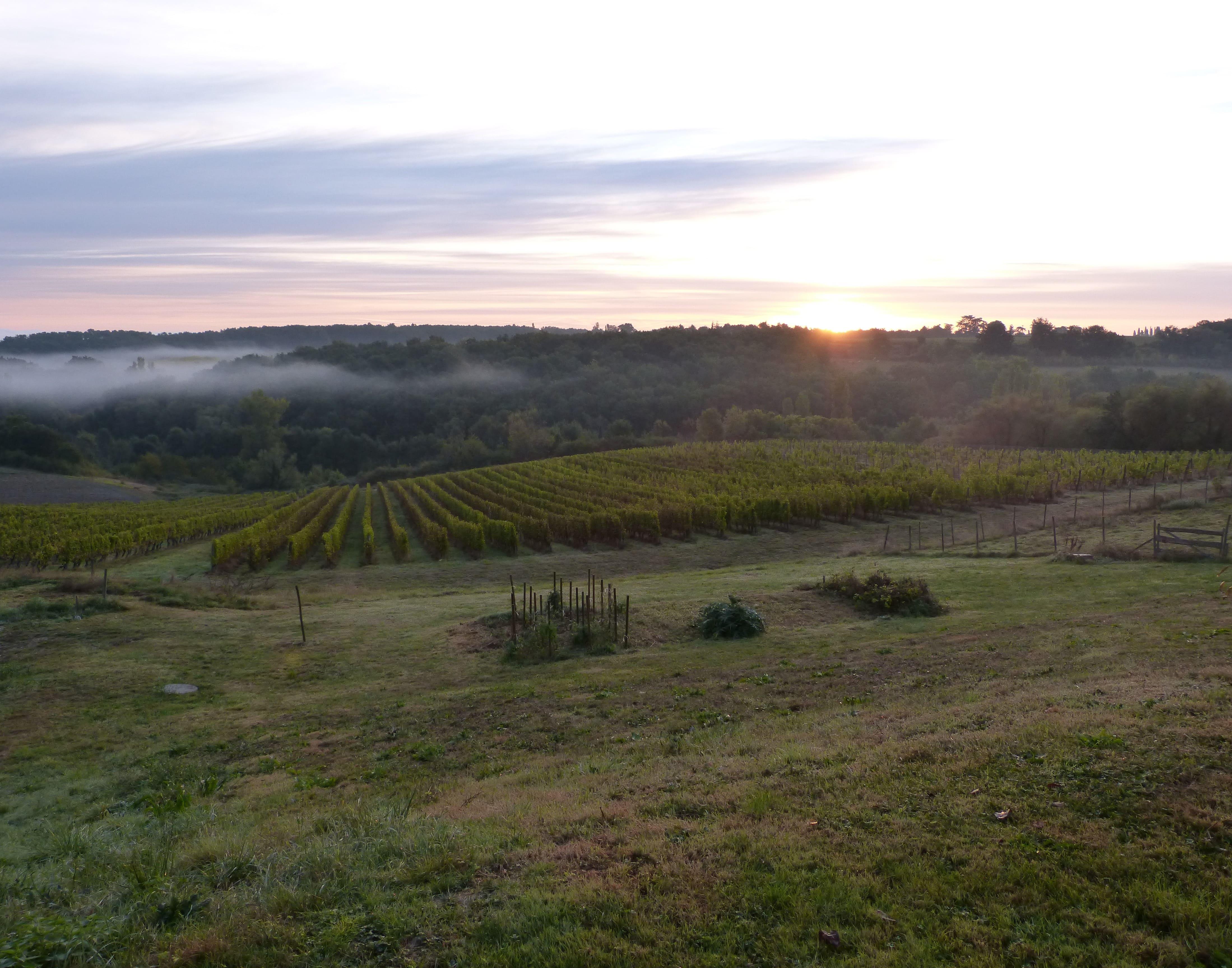 lever de soleil brume vignobles