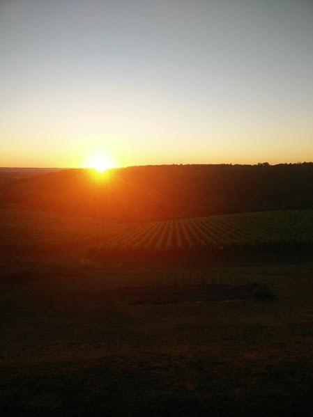 lever de soleil vignobles