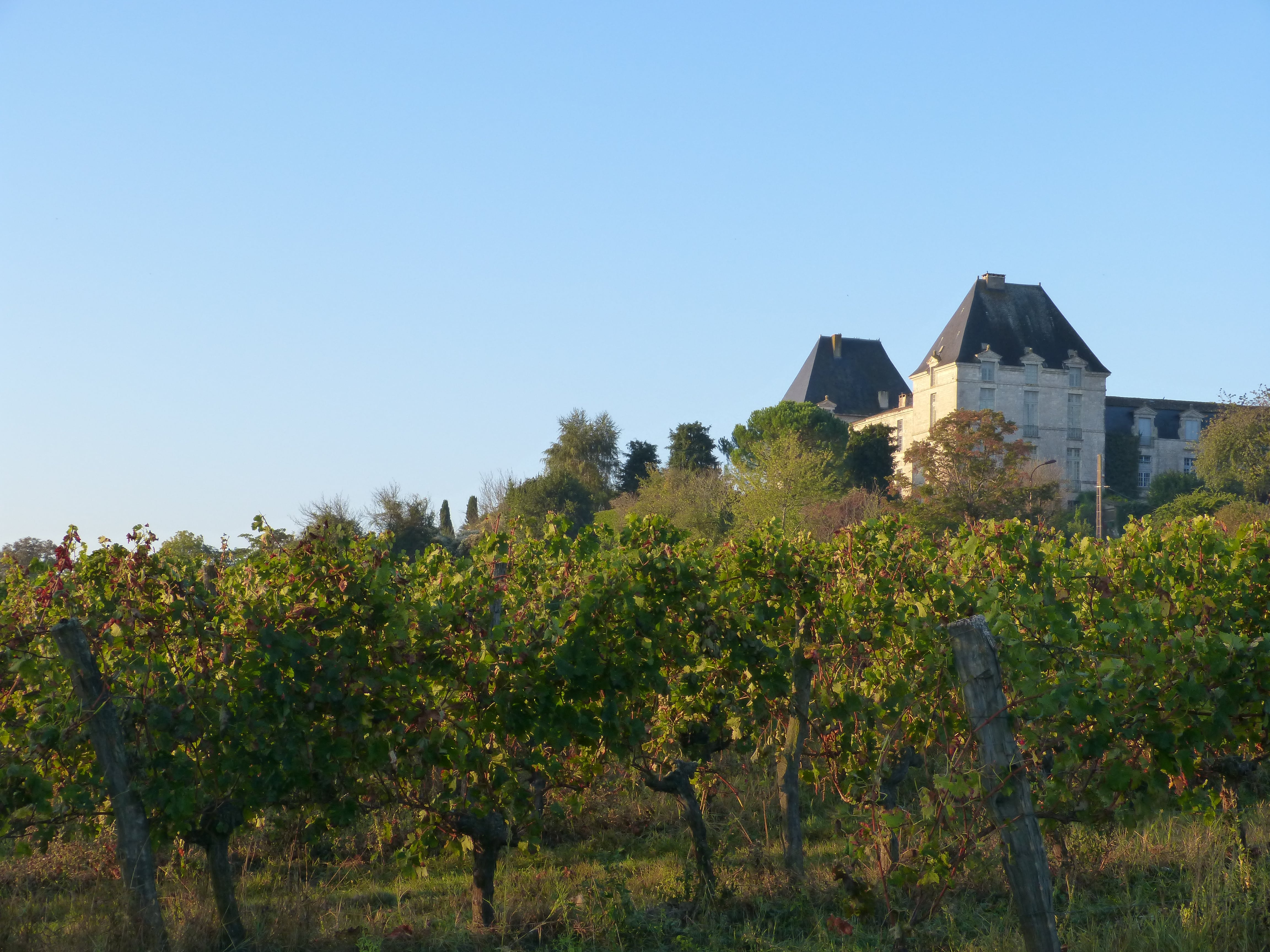 photo chateau de Saussignac